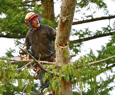 31-Everything about Tree Removal Services